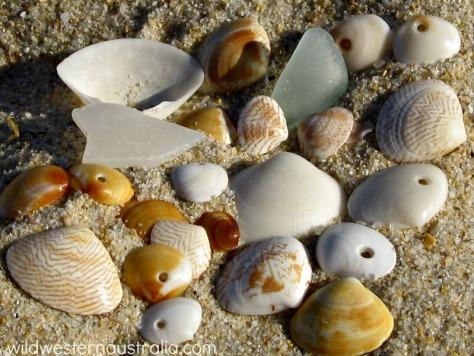 perth-beach-shells floreat