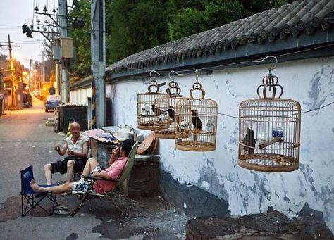 birdshutong