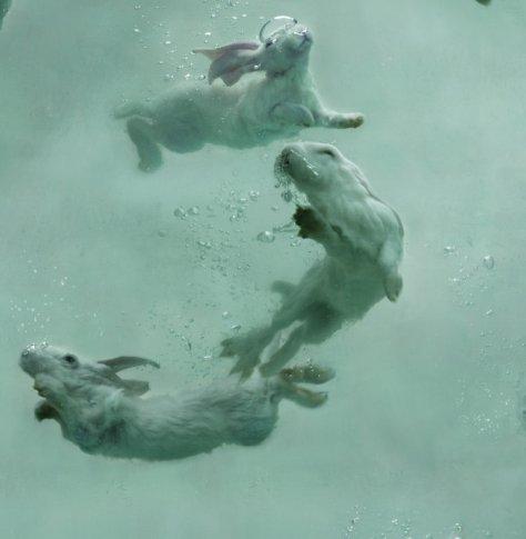 swimming-bunnies-zhou-hongbin-michele-mariaud-aquarium-23-detail2